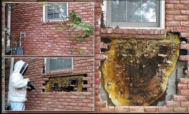 زوجان في أمريكا يتورطان و يشتريان منزل بسعر زهيد...